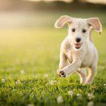 Eine Wurmkur, die Lösung für Ihren Hund?
