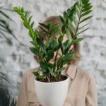 Eine Zitronenpflanze für den Innenbereich, Südstaaten-Charme pur
